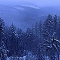 Bavarian forest in winter Poster by Intensivelight