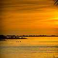 Bayport Dolphins Print by Marvin Spates