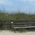 Beach Grass and Bench  Print by Cathy Lindsey