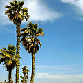 Beach View With Palms And Birds Print by Ben and Raisa Gertsberg