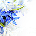 Beautiful Blue white Flower Print by Boon Mee