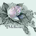 Beautiful Flowers for Mother's Day Print by Sarah Vernon