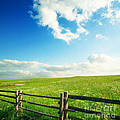Beautiful Sky On Greens landscape Poster by Boon Mee