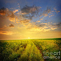 beautiful sunsets photos Poster by Boon Mee