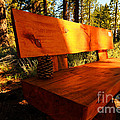 Bench in the Woods Poster by Cheryl Young