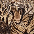 Bengal Tiger Poster by Vera White