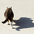 Big Cat Ferocious Shadow Print by James BO  Insogna