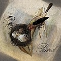 Bird Nest - sp11ac02 Poster by Variance Collections