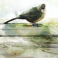 Bird on the Deck Print by Artist and Photographer Laura Wrede
