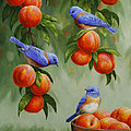 Bird Painting - Bluebirds and Peaches Print by Crista Forest