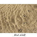 Bird Walk Print by Artist and Photographer Laura Wrede