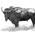 Bison Print by Aaron Spong