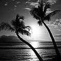 Black and White tropical Poster by Pierre Leclerc Photography