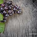 Black grapes Poster by Mythja  Photography