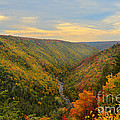 Blackwater gorge with fall leaves Print by Dan Friend