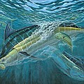 Blue And Mahi Mahi Underwater Poster by Terry Fox
