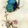 Blue Butterfly Poster by Warwick Goble