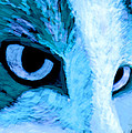 Blue Cat Face Print by Ann Powell