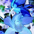 Blue Orchids Print by Kathleen Struckle
