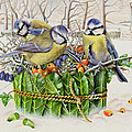 Blue Tits in Leaf Nest Poster by EB Watts