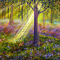Bluebell Woods Poster by Ann Marie Bone