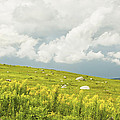 Blueberry Field And Goldenrod With Dramatic Sky In Maine Poster by Keith Webber Jr