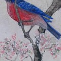 Bluebird in Cherry Blossoms Print by Sandy Clift