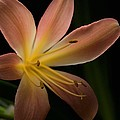 Bluete 3 Print by Antonio Castillo