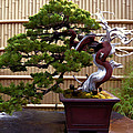 Bonsai Tree and Bamboo Fence Print by Elaine Plesser