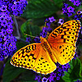 Boothbay Butterfly Print by Bill Caldwell -        ABeautifulSky Photography