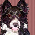 Border Collie Poster by Sharon Marcella Marston