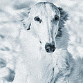 borzoi russian hound portrait by Christian Lagereek