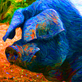 Boss Hog - 2013-0108 - square Print by Wingsdomain Art and Photography