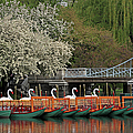 Boston Swan Boats  Print by Juergen Roth