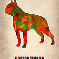 Boston Terrier Poster Print by Irina  March