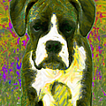 Boxer 20130126v2 Print by Wingsdomain Art and Photography