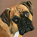 Boxer Dog Poster by Sarah Dowson