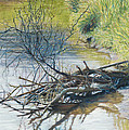 Branches by a River Bank Print by Nick Payne