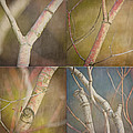 Branches Times Four Poster by Bonnie Bruno