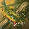 Brook Trout  Hideaway Poster by Jon Q Wright