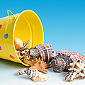 Bucket of Seashells Still Life Poster by Tom Mc Nemar