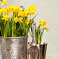 Buckets Of Daffodils Print by Amanda And Christopher Elwell