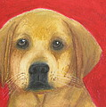 Buddy the Labrador Poster by Jeanne Fischer