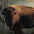 Buffalo Moon Print by Karen Slagle
