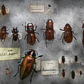 Bug Collector - The insect Collection  Poster by Mike Savad