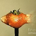Bullet Piercing A Strawberry Print by Gary S. Settles