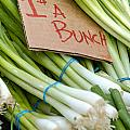 Bunches of Onions Poster by Teri Virbickis