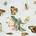 Butterflies moths and other insects with a sprig of apple blossom Print by Jan Van Kessel