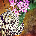 Butterfly Art - Hanging On - By Sharon Cummings Poster by Sharon Cummings