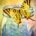 Butterfly Blue Glass Jar Poster by Bob Orsillo